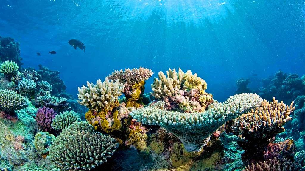 recif corail 01