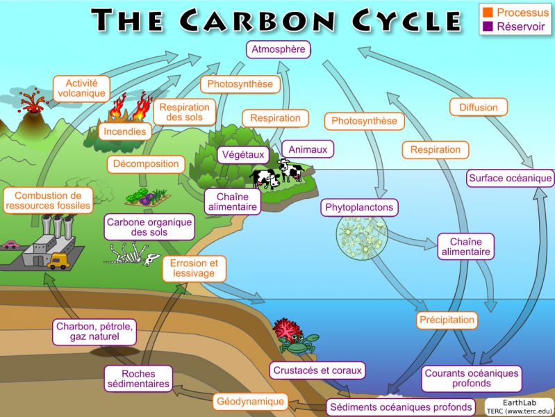 Cycle_Carbone