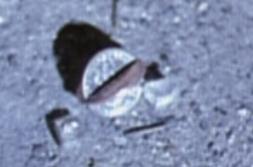 Piece fusionne X-Files