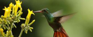 Les aventures du petit colibri