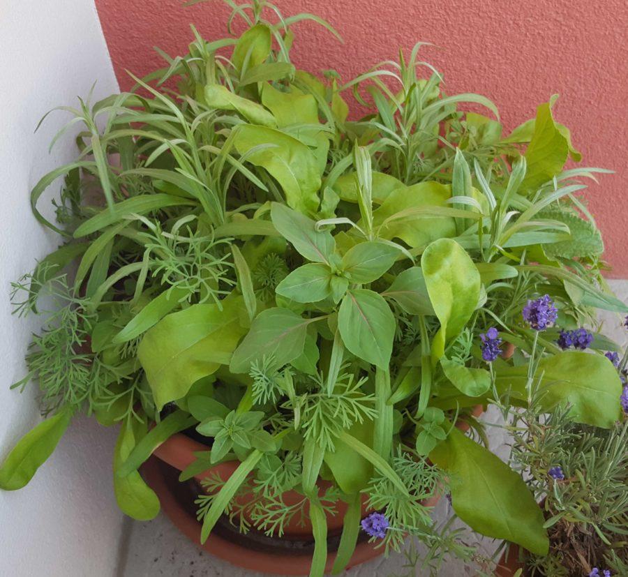 Jardinière mellifères Juin
